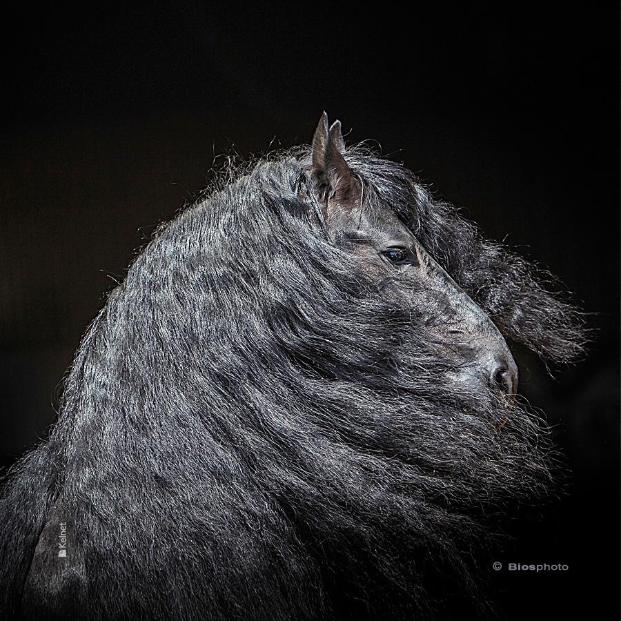 Collec chevaux 2 4684 chev215