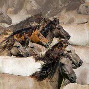 Collec chevaux 2 4686 chev213