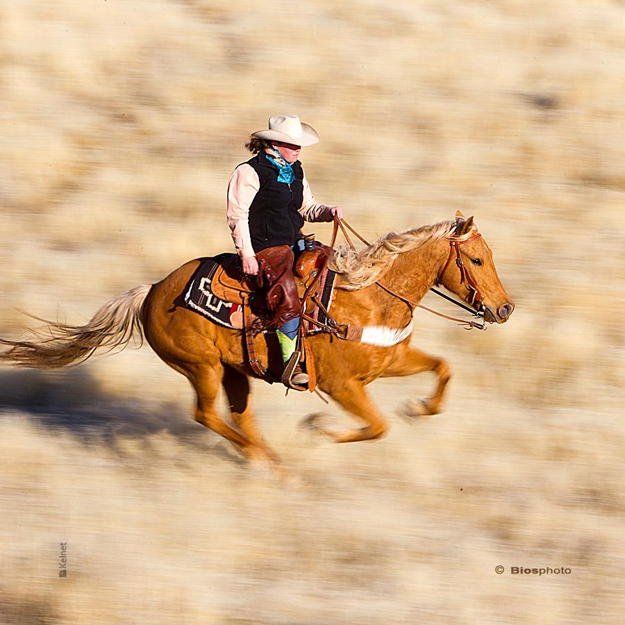 Collec chevaux 2 4687 chev212