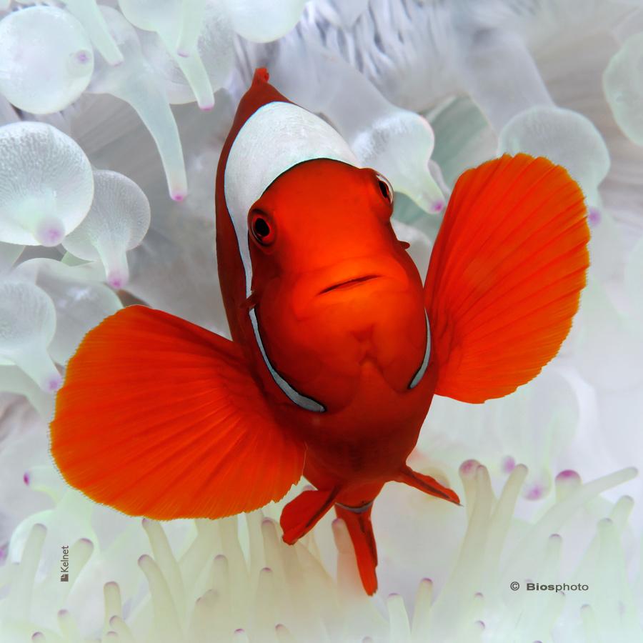 Collec couleurs aquatiques 2 4700 aqua219