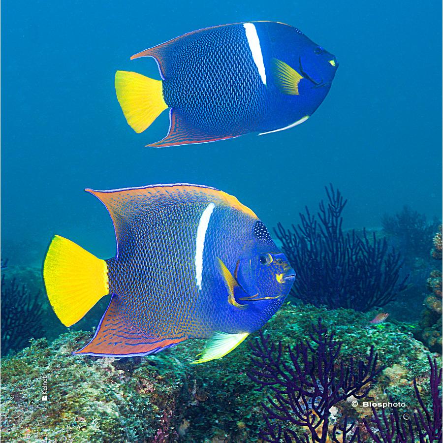 Collec couleurs aquatiques 2 4701 aqua220