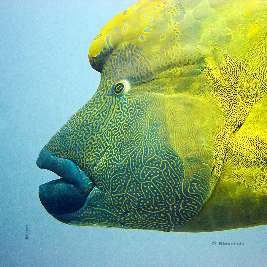 Collec couleurs aquatiques 2 4702 aqua216