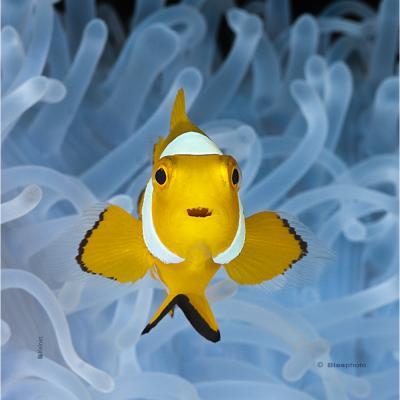 Microfibre Aquatiques 215