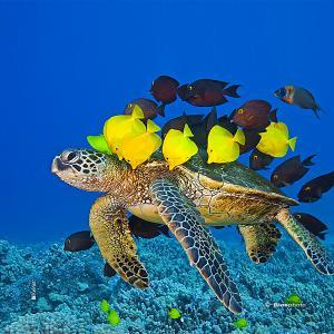 Collec couleurs aquatiques 2 4708 aqua212