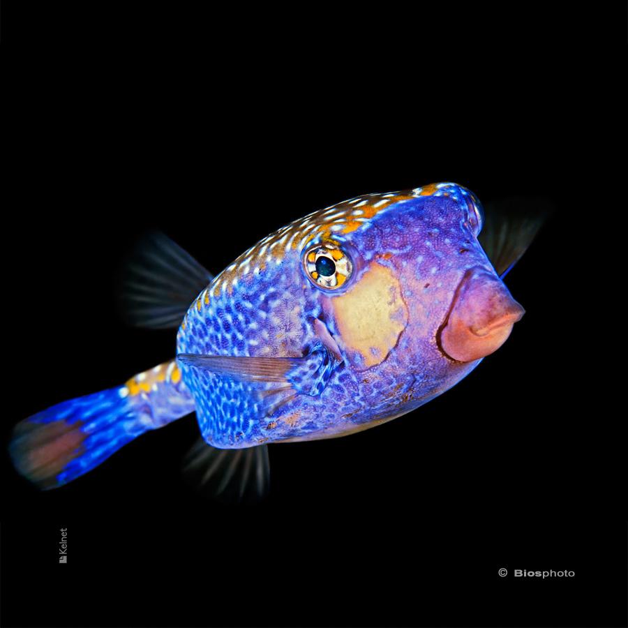 Collec couleurs aquatiques 2 4712 aqua208