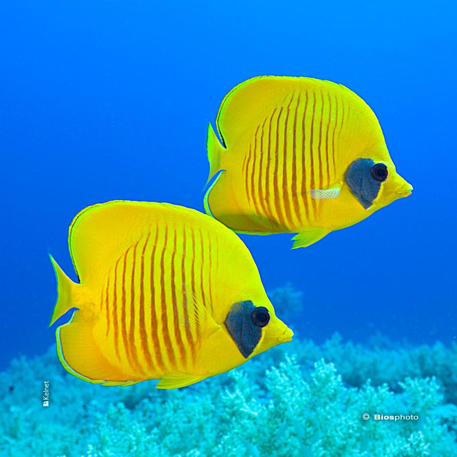 Collec couleurs aquatiques 2 4715 aqua205