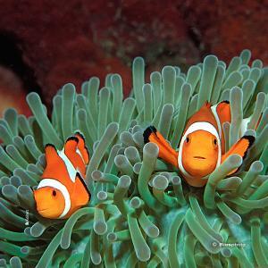 Collec couleurs aquatiques 2 4717 aqua203