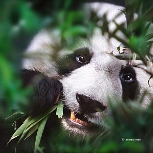 Collection animaux du monde 4570 anim008