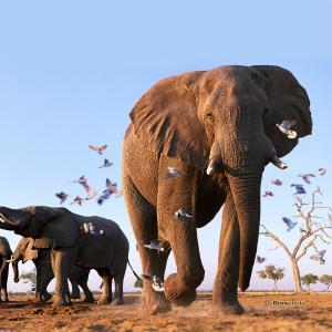 Collection animaux du monde 4571 anim009