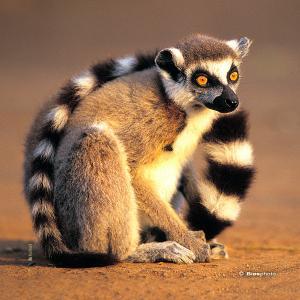 Collection animaux du monde 4576 anim003