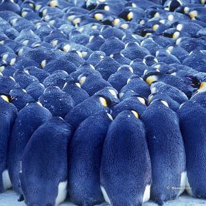 Collection animaux du monde 4578 anim001