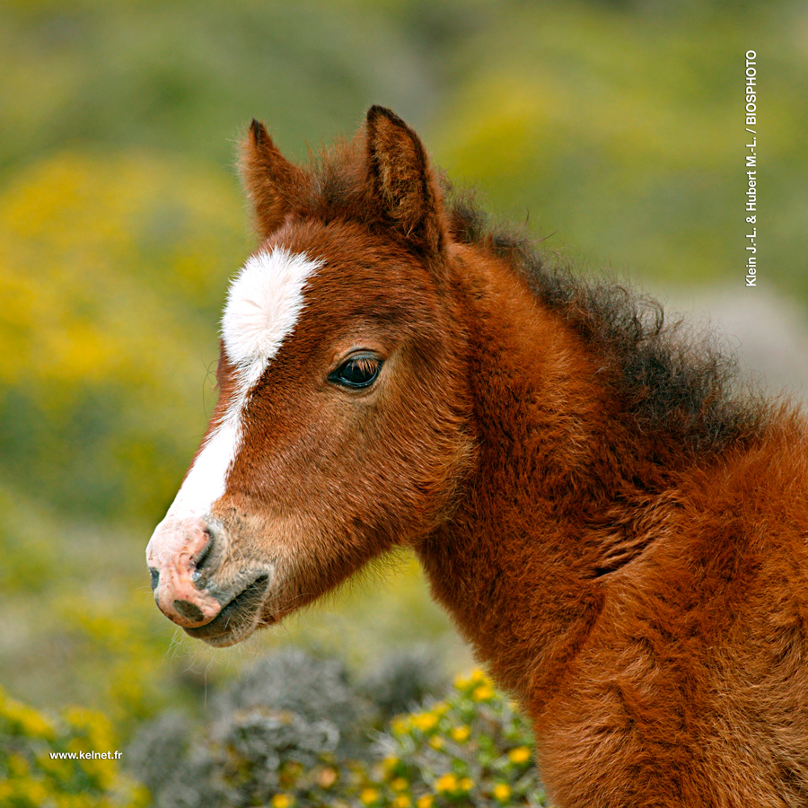 collection-bebes-animaux-1-1082-bba02.jpg