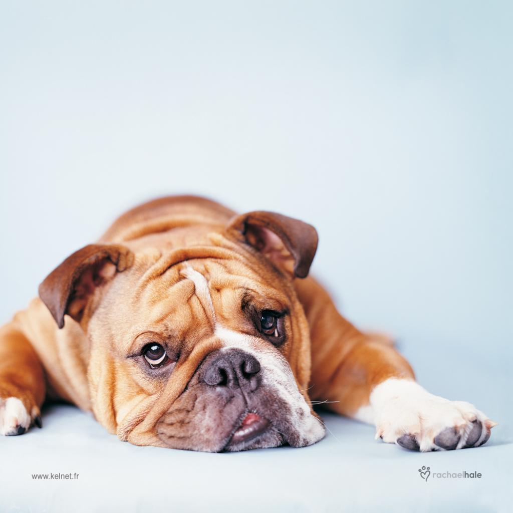 Microfibre chien