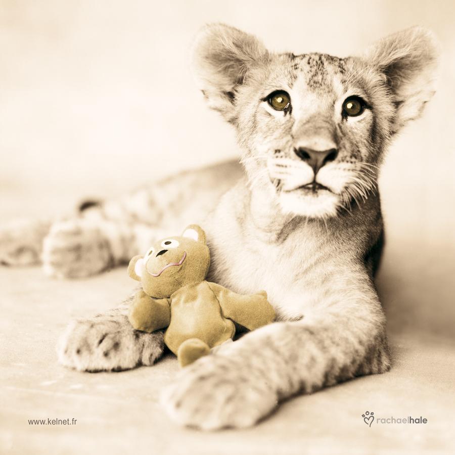 Microfibre Lunettes lion